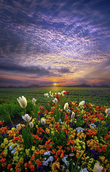Photograph - The Sun Just Touched The Morning by Phil Koch