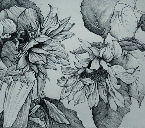 Sunflower Seeds Drawing - The Sunflowers by Catherine Robertson