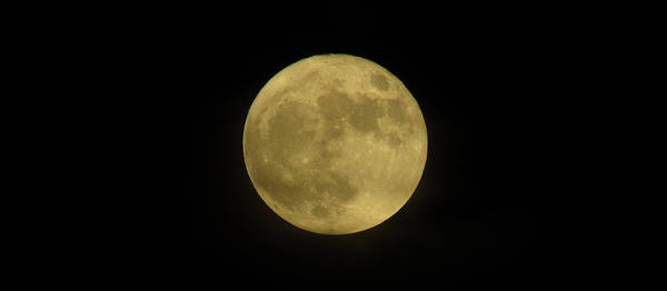 Photograph - The Super Moon by Robert Knight