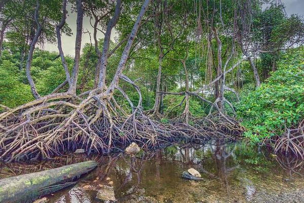 Mangroves Digital Art - The Swamp by Nadia Sanowar