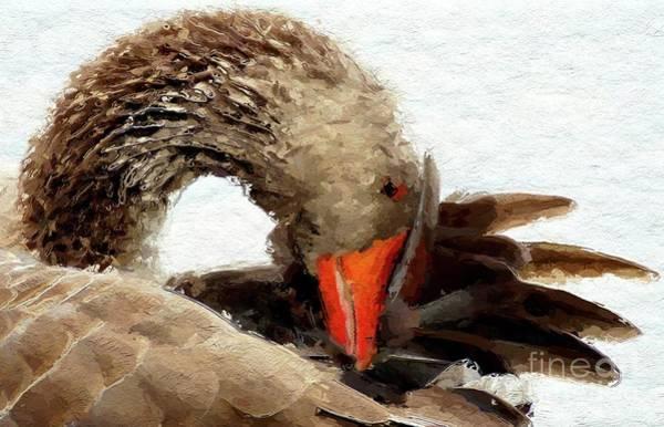 Cygnet Wall Art - Digital Art - The Swan by Mary Bassett