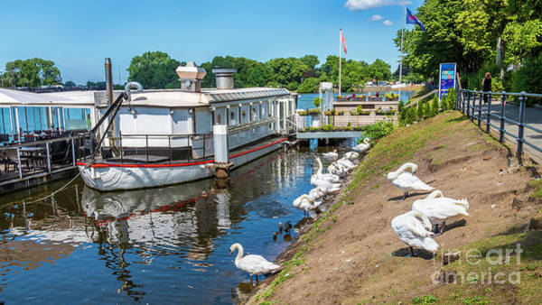 Photograph - The Swans And A  Floating Cafe  by Marina Usmanskaya