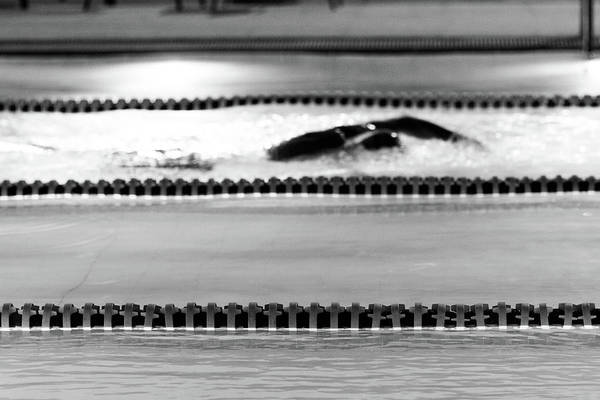 Photograph - The Swim by SR Green