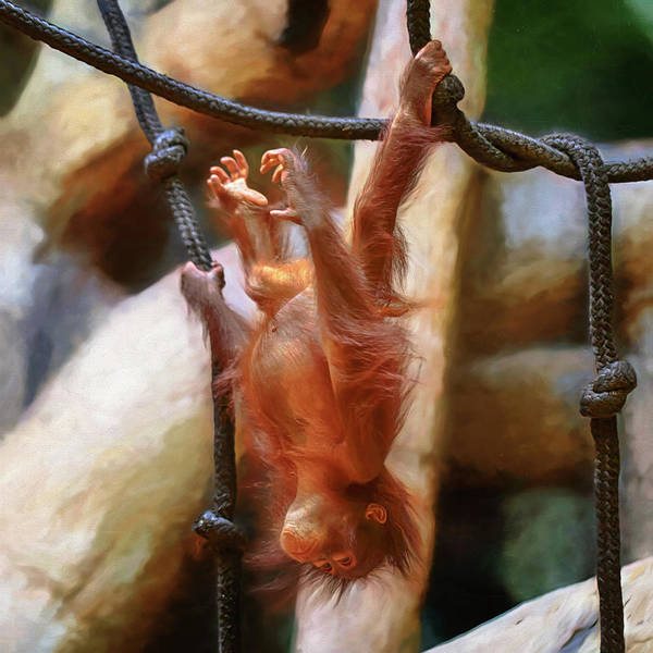 Little Things Photograph - The Swing Of Things #4 by Susan Rissi Tregoning