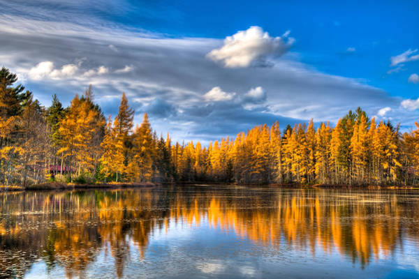 Photograph - The Tamaracks At Woodcraft Camp by David Patterson