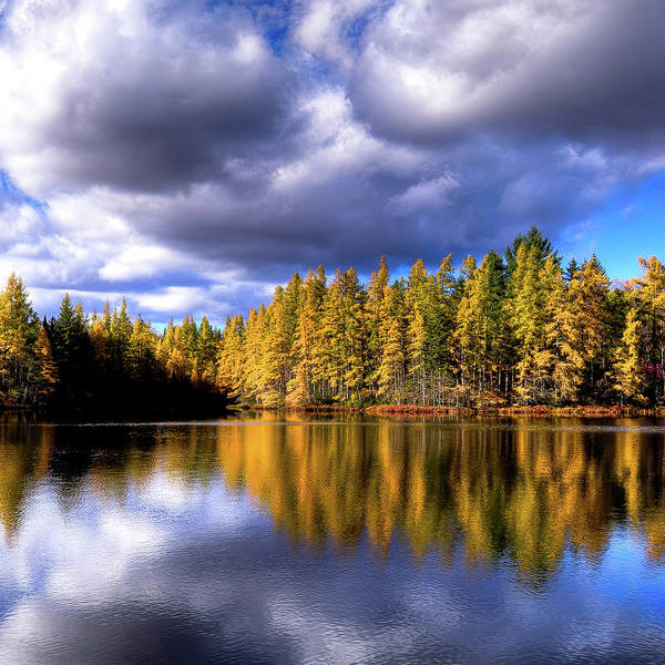 Photograph - The Tamaracks by David Patterson