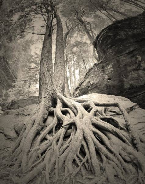 Photograph - The Tangled Web We Weave Black And White by Lisa Wooten