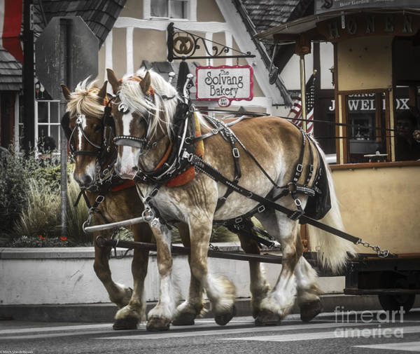 Solvang Photograph - The Team Of Two by Mitch Shindelbower