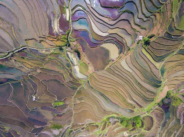 Photograph - The Terraces Of Yuanyang China by Matt Shiffler