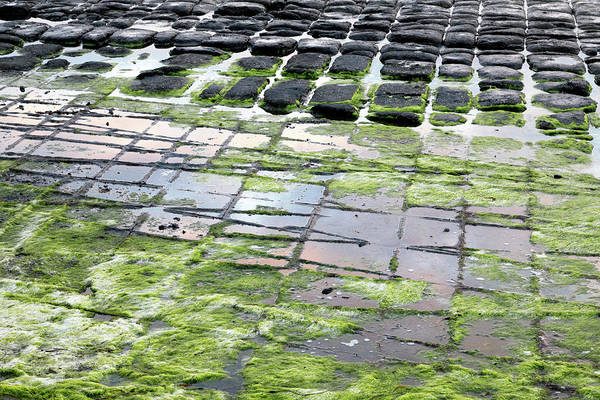Photograph - The Tessellated Pavement by Nicholas Blackwell