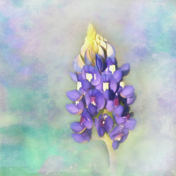 Wall Art - Photograph - The Texas State Flower The Bluebonnet by David and Carol Kelly