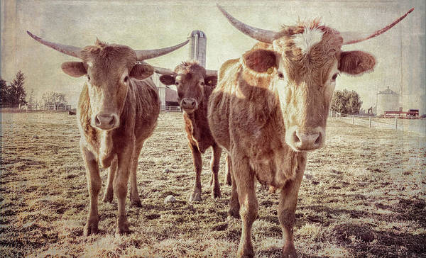 Photograph - The Three Amigos by Garvin Hunter