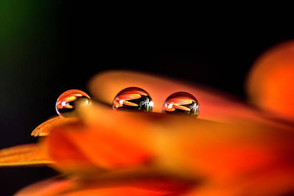 Photograph - The Three Drops by Wolfgang Stocker