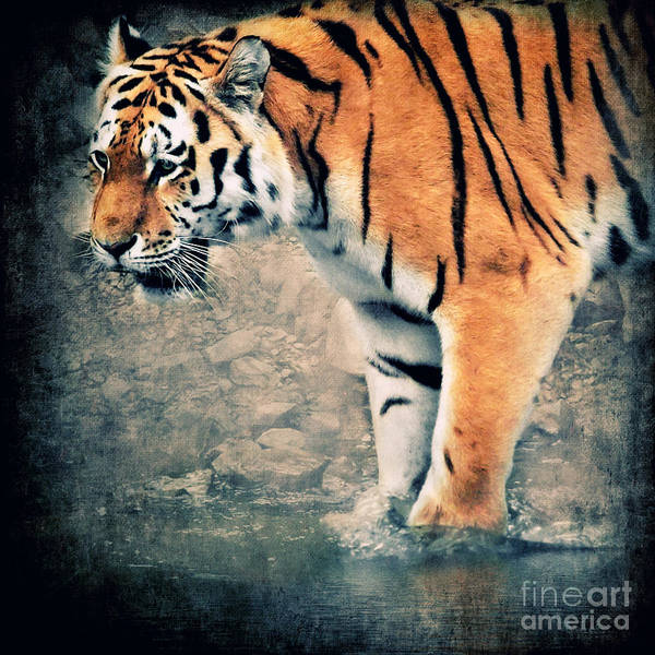 Tiger Digital Art - The Tiger by Angela Doelling AD DESIGN Photo and PhotoArt