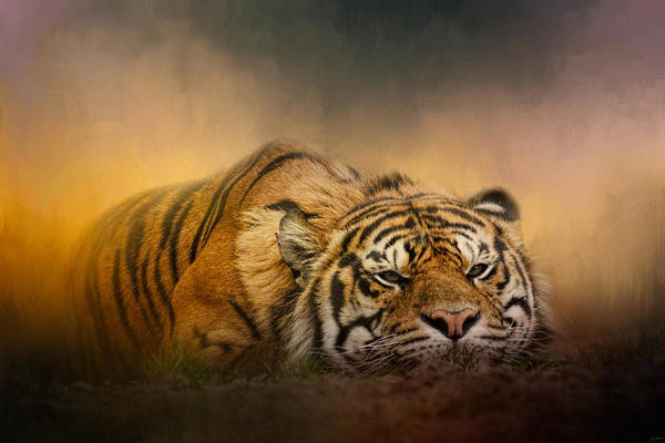 Photograph - The Tiger Awakens by Jai Johnson