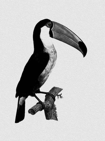 Toucan Photograph - The Toucan by Mark Rogan