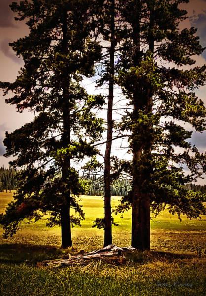 Digital Art - The Tree Amigos by Susan Kinney