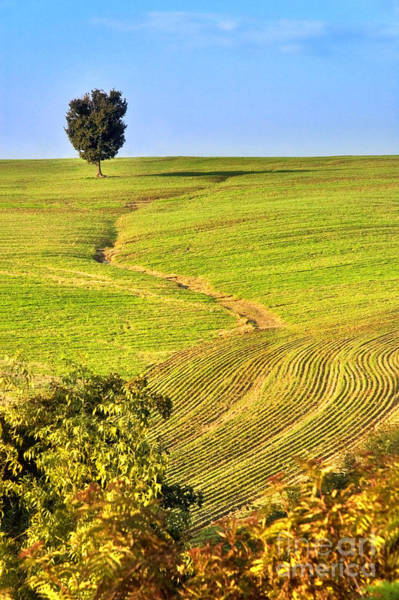 Photograph - The Tree And The Furrows by Silvia Ganora
