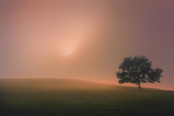 Photograph - The Tree And The Sun by Mikel Martinez de Osaba