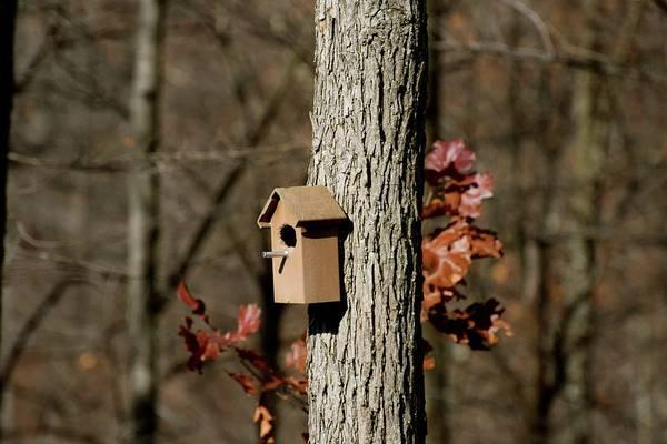 Photograph - The Tree House by Jenny Regan