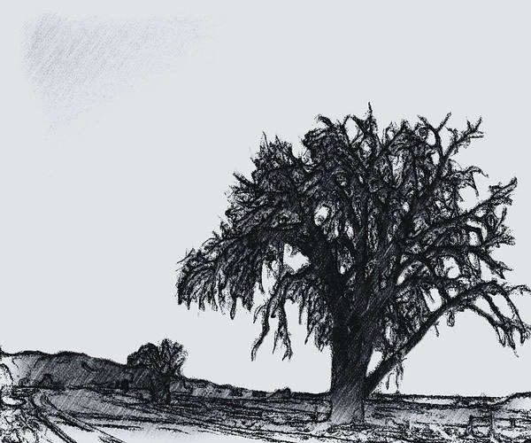 Wall Art - Photograph - The Tree In The Middle Of Nowhere by Janis Beauchamp