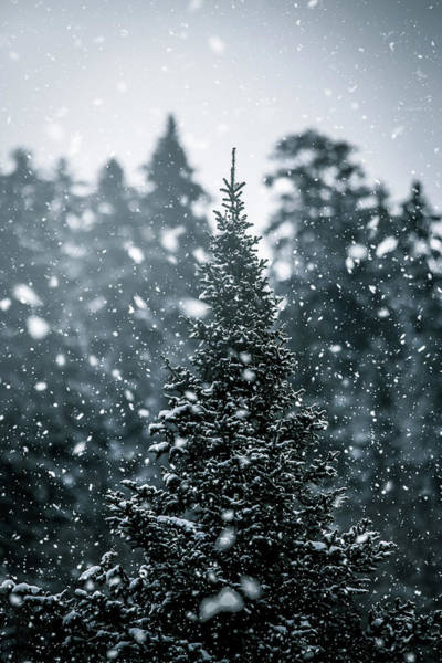 Christmass Photograph - The Tree by Jay Lapointte