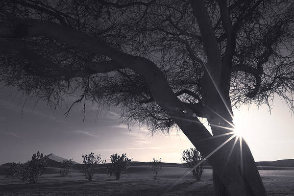 Photograph - The Tree And Light  by Khaled Hmaad