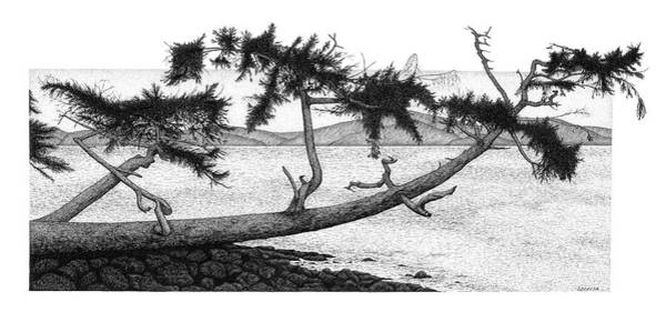 Drawing - The Tree by Lorrisa Dussault