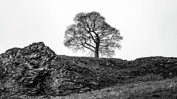 Photograph - The Tree by Makk Black