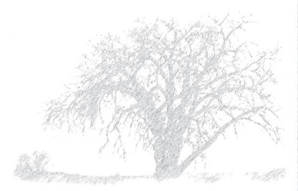 Wall Art - Photograph - The Tree Nowhere by Janis Beauchamp