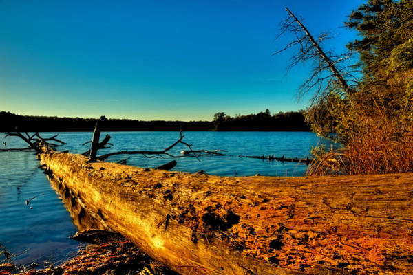 Photograph - The Tree On Nicks Lake by David Patterson