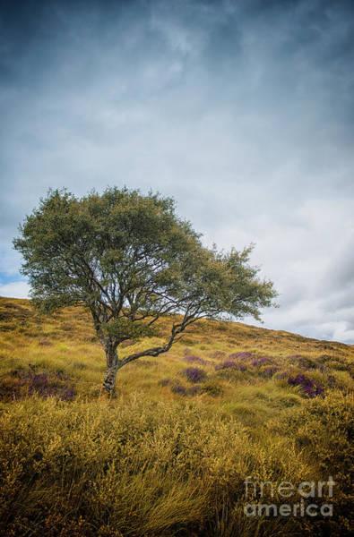 Photograph - The Tree On The Hillside by David Lichtneker