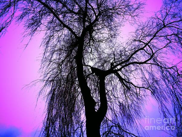 Photograph - The Tree by Mhiss Little