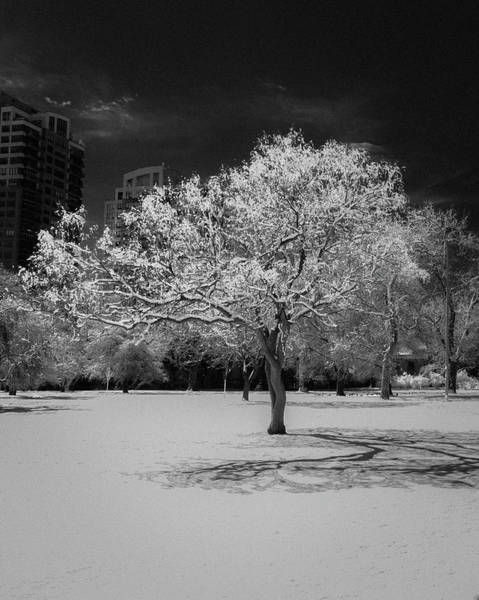 Mile High City Photograph - The Tree Stands Alone by Bridget Calip