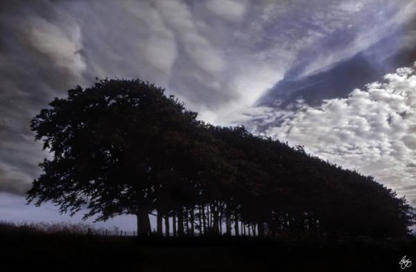 Photograph - The Tree Train by Wayne King