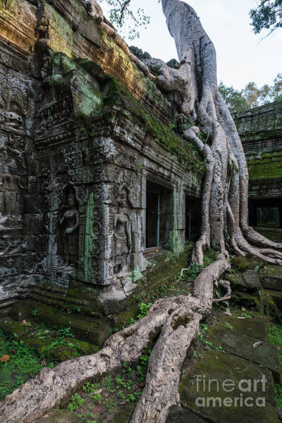 Angkor Wall Art - Photograph - The Tree Wins by Mike Reid