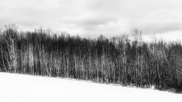 Photograph - The Trees 2018 by Bill Wakeley