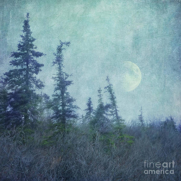 Boreal Forest Photograph - The Trees And The Moon by Priska Wettstein