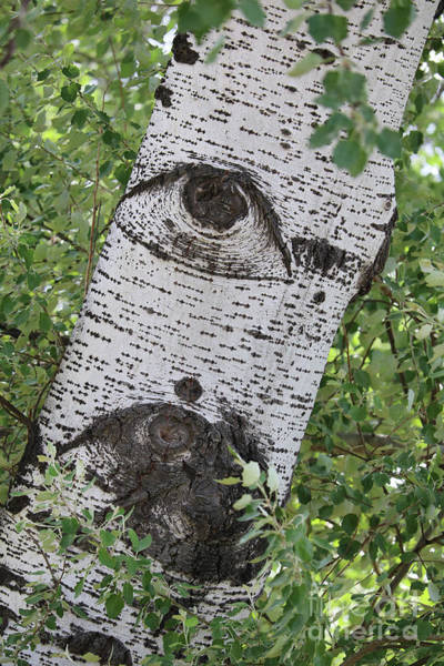 Photograph - The Trees Have Eyes by Carol Groenen