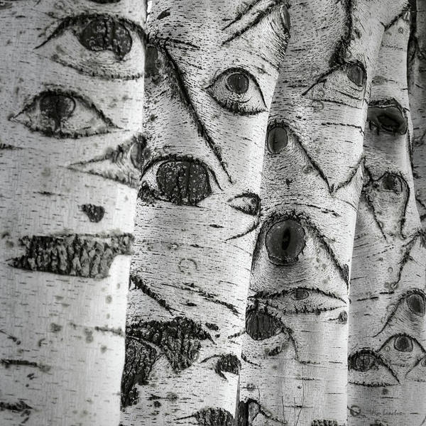 Greyscale Photograph - The Trees Have Eyes by Wim Lanclus
