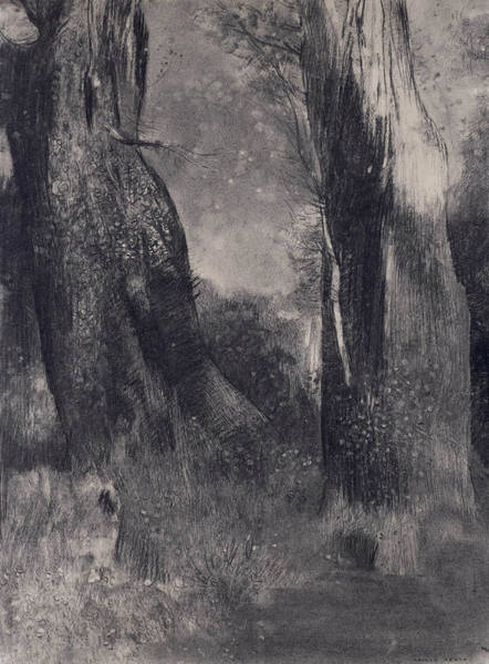 Drawing - The Trees by Odilon Redon