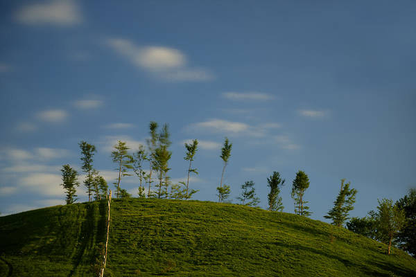 Photograph - The Trees On The Hill by Enrico Pelos
