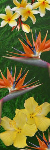 Photograph - The Tropics by Ben and Raisa Gertsberg