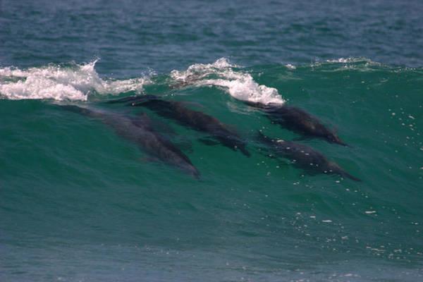 Photograph - The True Surfers by Brad Scott