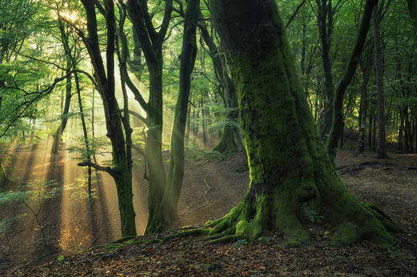 Wall Art - Photograph - The Trunk by Martin Podt