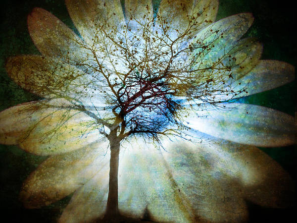 Photograph - The Truth Of Trees by Tara Turner