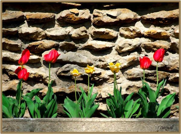 Wall Art - Photograph - The Tulip Wall by Jim  Darnall