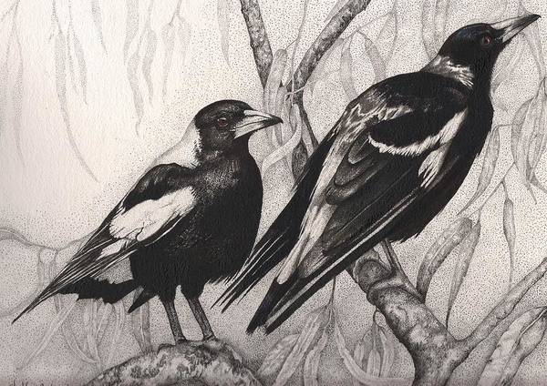 Magpies Drawing - The Two Of Us by Shelley Richardson