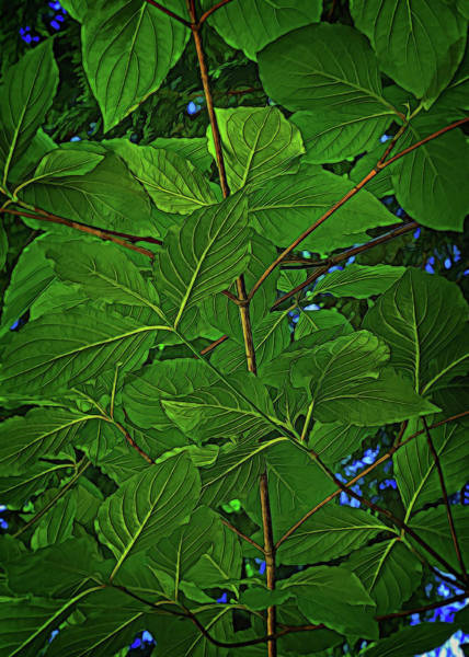 Digital Art - The Underside Of Leaves by Richard Farrington