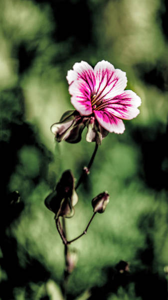 Photograph - The Unknown Weed by Onyonet  Photo Studios